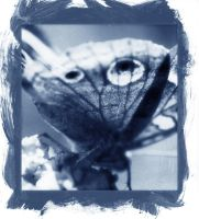 Cyanotype Butterfly by pntbll248