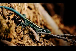 Chilean Lizard 4 by magoscuro