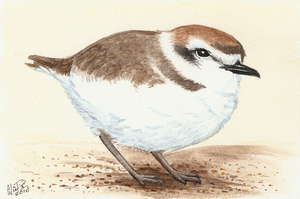 Winterbirds - Snowy Plover by twapa