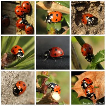 Ladybird Project by xHalloweenx