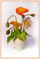 Mohn Stock 01 by NellyGrace3103