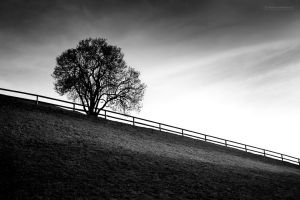 spring almost by ChristianRudat