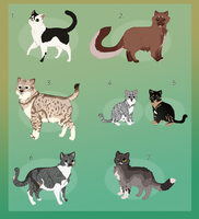 Rescue cat adoptables :TAKEN: by Kultapossu