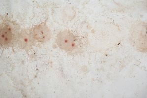 Grunge Paper Stock 3 of 3 by kbhollo