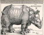 Durer's Rhinoceros by hogret-stock