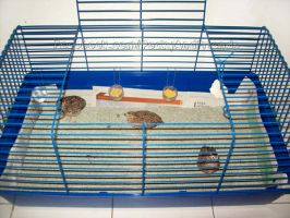 New cage for quails by emmil