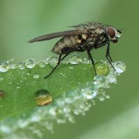 wet fly by indojo