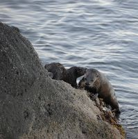 Otters by rmbastey