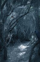 free background eerie series 3 by H-stock