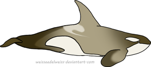 Antarctic Orca: Adopt  igloo9201 by WeisseEdelweiss
