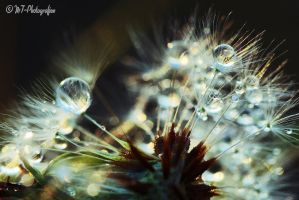natural spectacles 29 by MT-Photografien