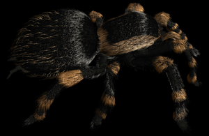 Tarantula Model 4 by ChozoBoy
