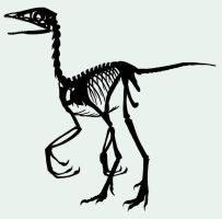 Archaeopteryx Skeleton by fanchielover15