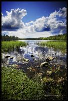 Black pond by asiantuntija