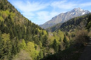 Pyrenees by AuroraxCore