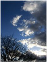 Looming Clouds and Tree by missionverdana
