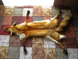 Red fox - rug cut, all four paws/claws/ - FOR SALE by SPWilder