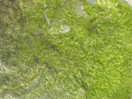 Moss Cover Rock Texture 1 by FairieGoodMother