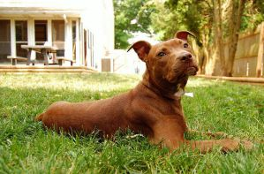 Current Foster: Chyna by FosterPaws