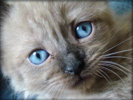 Blue Eyed Baby Girl by leonvw