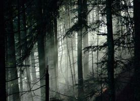 foret by rdalpes