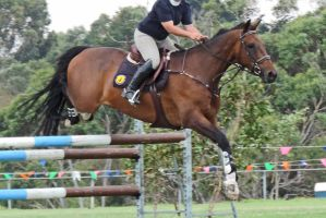 Bay ShowJumping Horse Stock by Silverti