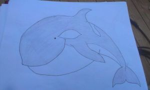 Cute Killer Whale / Orca by AbbyRoses
