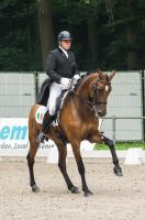 Dressage Stock - III by Summerly
