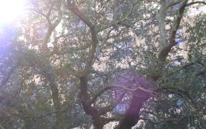 Trees and Lense Flare by brianhaddad