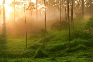 Morning theme 4 by iqbalnugraha