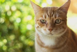 Ginger Cat by Jessicahphotography
