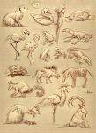 Zoo Sketches 1-16-14 by 47ness
