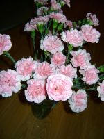 Pink Carnations by princesslillymono