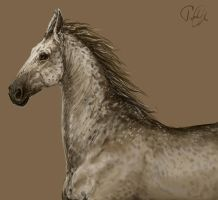 Title Horse 1 by LonGrand