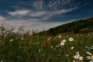 summer meadow by Miky57