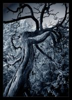 The Dark Tree II by x-horizon
