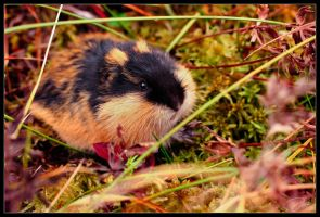 Cute nordic lemming by DaXXe