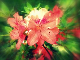 pure flower by florina23