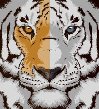 Tiger by craniodsgn