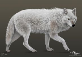White wolf by makangeni