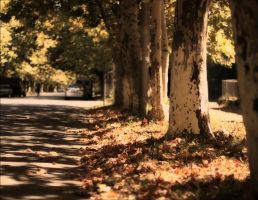 Trees, summer, Sukhum by Lilia73