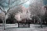 Le banc by Anrold