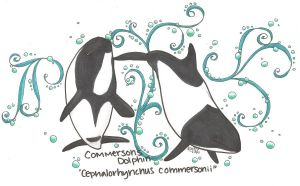 commerson's dolphins by iwuvrubberduckies