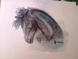 Black horse on watercolour by lauraacan