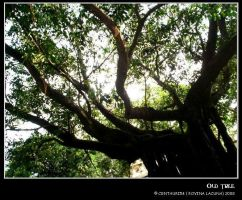 OLD TREe by Centauri54