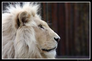 White Lion Profile by Arwen91
