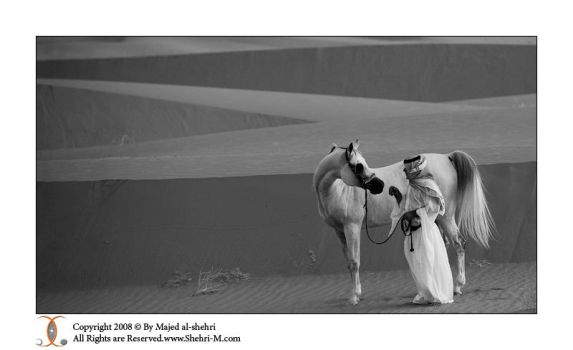 Arabian Horse -2 by shehri