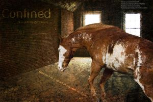 Confined by poliu365