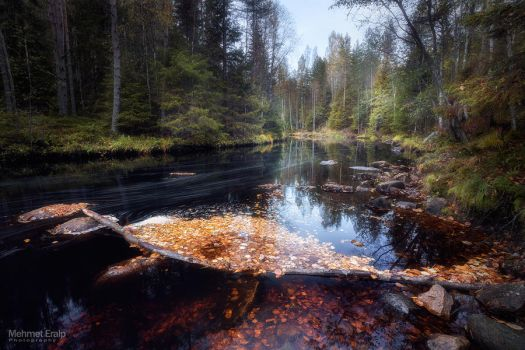 Flow of life by m-eralp