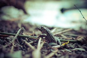 Mr Frog, just resting by ju1iu5